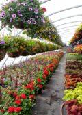 Production maquinas para floricultura y horticultura