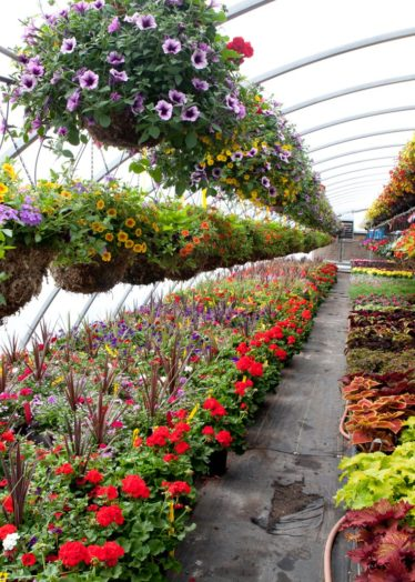 horticulture machinery floriculture